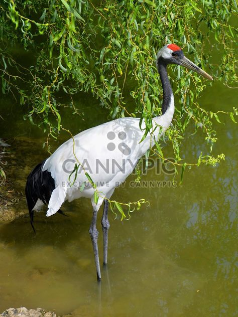 Crane in pond in a park - Free image #330293