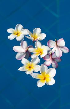 Close up of Plumeria on water - image gratuit #330883