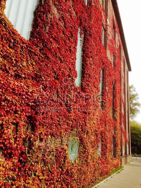 Folhagem de outono na fachada do edifício - Free image #330973
