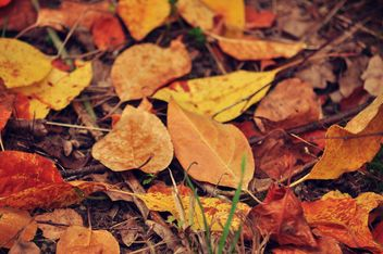Autumn foliage - Free image #331013