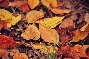 Autumn foliage - Kostenloses image #331013