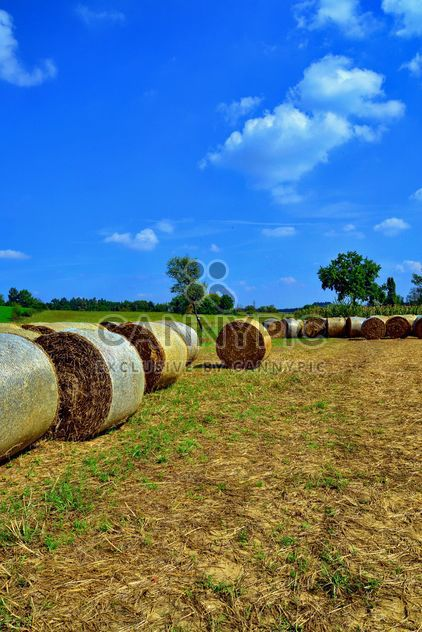 Countryside agriculture - Free image #333733