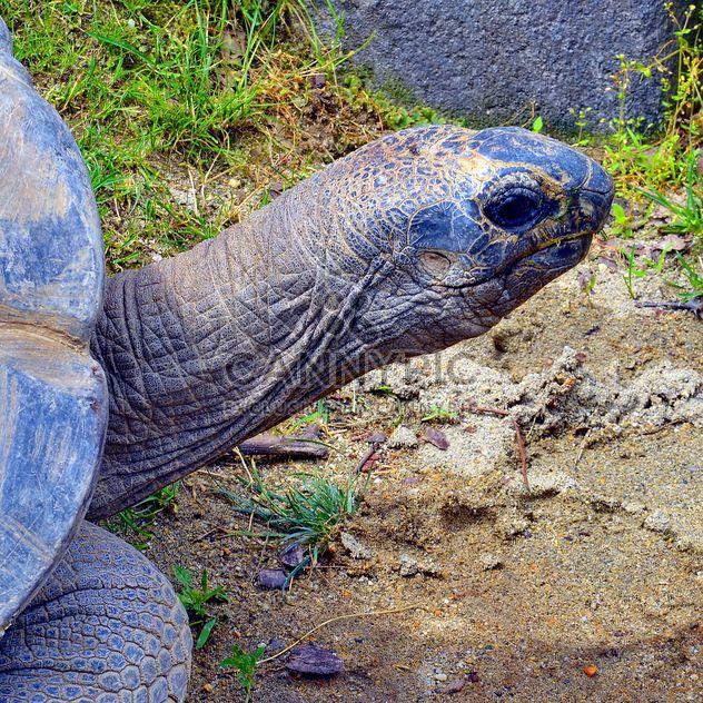Portrait of Giant turtle - Free image #334723