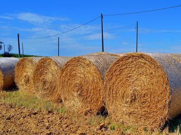 Haystacks, rolled into a cylinders - image gratuit #334733