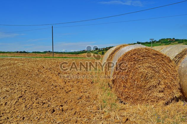 Haystacks, rolled into a cylinders - Free image #334743