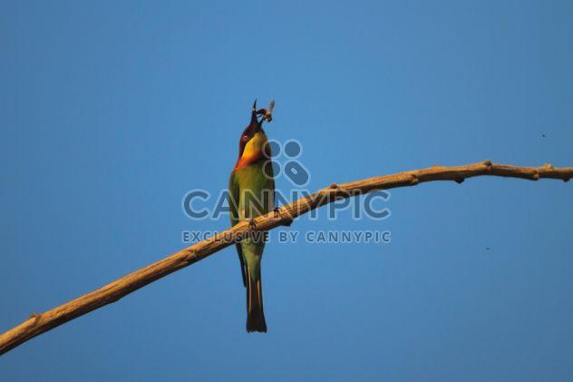 Pássaro Martim-pescador na filial - Free image #337443