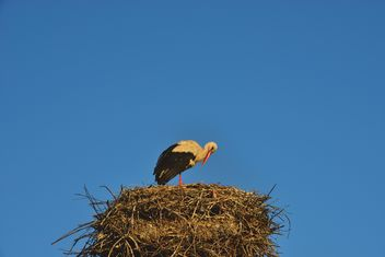 Stork in nest against sky - Free image #337563