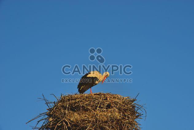 Cigogne au nid dans le ciel - Free image #337563