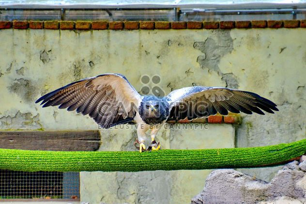 Bird of prey in zoo - Free image #337813
