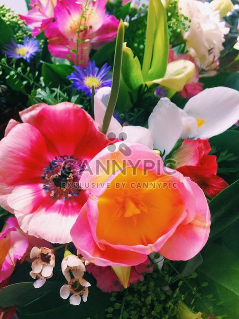 Bouquet of flowers closeup - Free image #337913