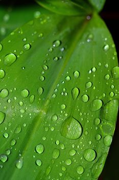 Leaf with water drops - Free image #338273
