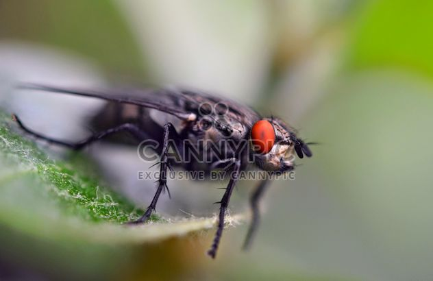 Fly on green leaf - image #338283 gratis