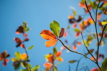 Colorful leaves on tree branches - image #338603 gratis
