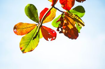 Colorful leaves on tree branch - image #338613 gratis