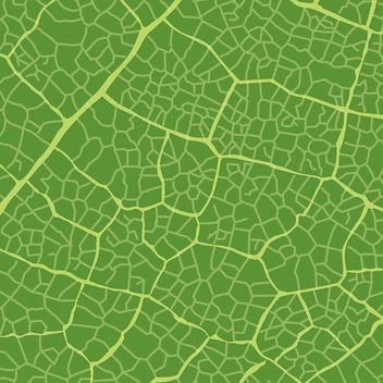 Green Leaf Texture - vector gratuit #341123