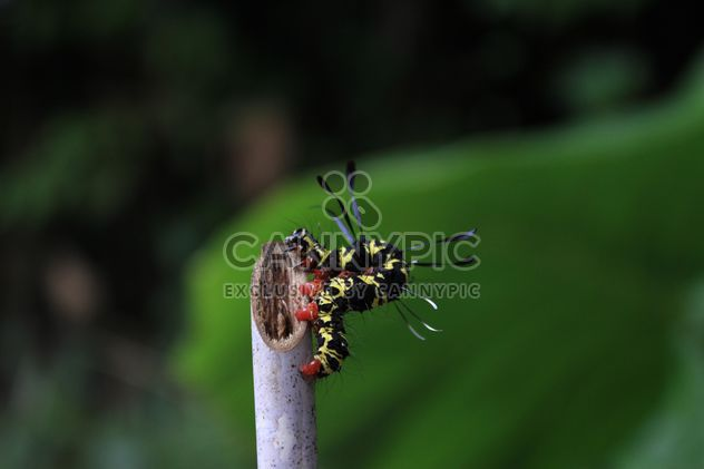 Caterpillar on wooden stick - image gratuit #341303