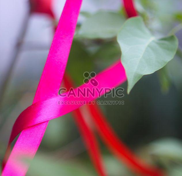Fita rosa em uma planta - Free image #342093