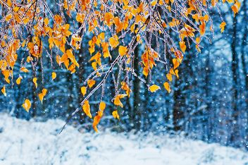 branches with yellow leaves in ice - image gratuit #342893