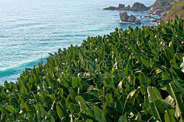 Banana Trees by the sea - image gratuit #343563
