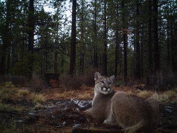 Puma - Free image #343943