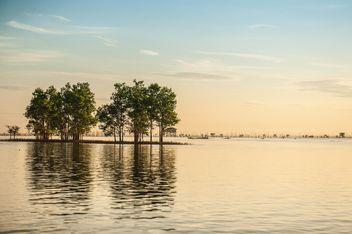 Trees sticking from water - бесплатный image #344093