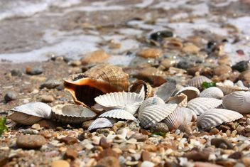 Sea shell texture - Kostenloses image #344103