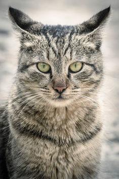 Cat - Free image #344963