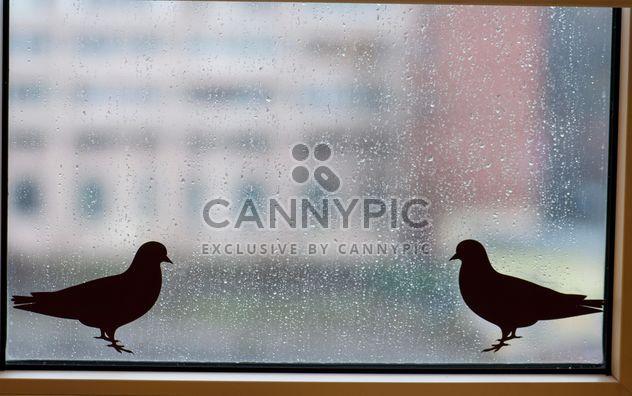 Stickers oiseaux sur la fenêtre avec les gouttes de pluie - image gratuit #345013