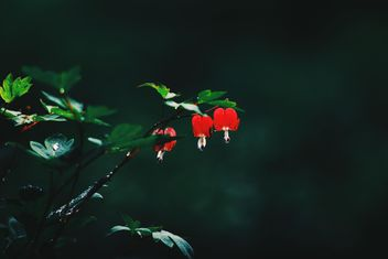 Small red flowers on twig in garden - image gratuit #345123