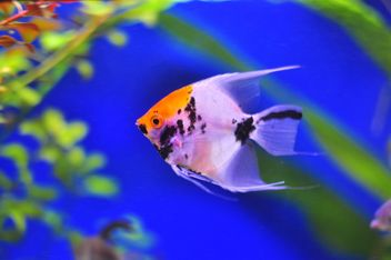 Beautiful fish in aquarium - Kostenloses image #346923