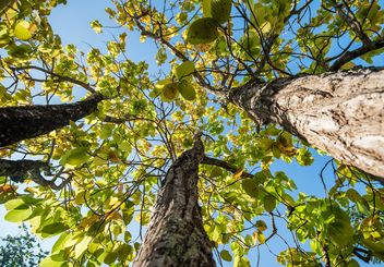 Green trees against blue sky, view from below - image #347213 gratis