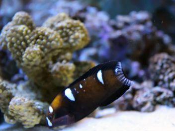 Aquarium marine - Free image #350213
