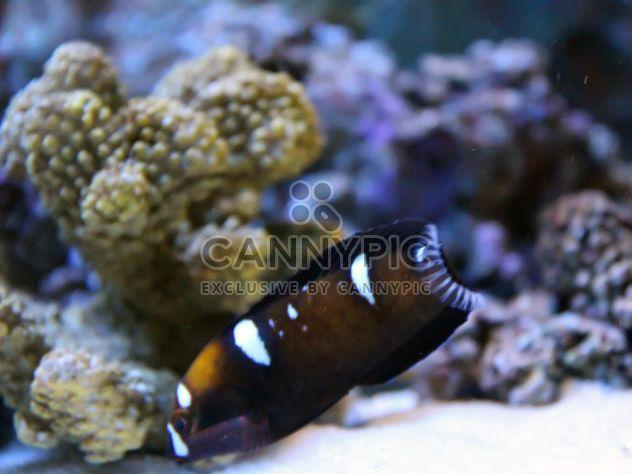 Marine Aquarium - image #350213 gratis