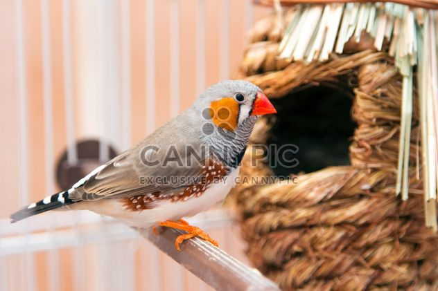 Zebra finch in cage - Free image #350243