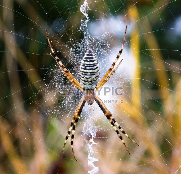 Gouttes de rosée araignée sur toile d'araignée - image gratuit(e) #350273