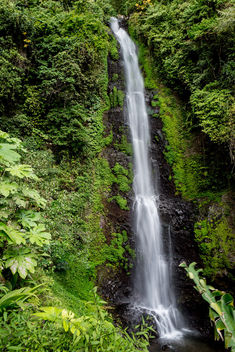 Lush waterfall - Free image #351563