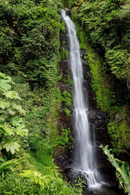 Lush waterfall - image #351563 gratis