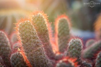 Hug me i'am a Cactus - image gratuit #355823