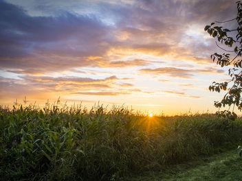 Cornfield Sunset - Free image #361353