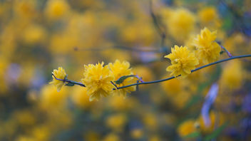 Yellow - image gratuit #362563