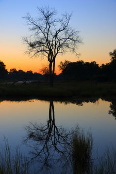 Reflections in the Delta - image #368183 gratis