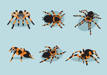 Various Tarantula Vector - Free vector #368823