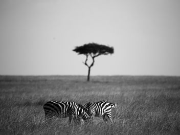 The Mara - Free image #376463