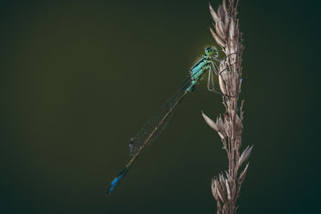 Dragonfly - Free image #376693