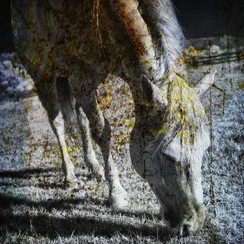 paint horse - Free image #377143
