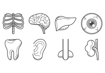 Free Human Organ Icon Vector - Kostenloses vector #378843