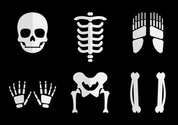 Human Bones Vector - Free vector #383613