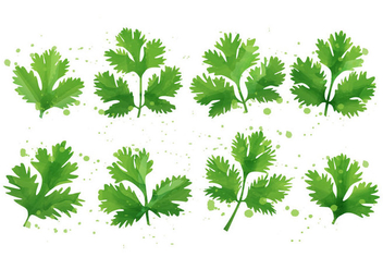 Cilantro - Mint Leaf - бесплатный vector #385653