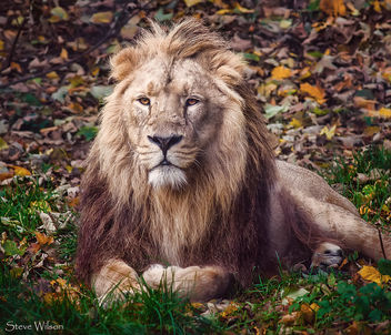 King of the Jungle - Free image #385923