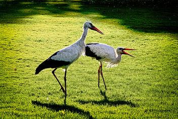 Annoyed Storks - Kostenloses image #385943